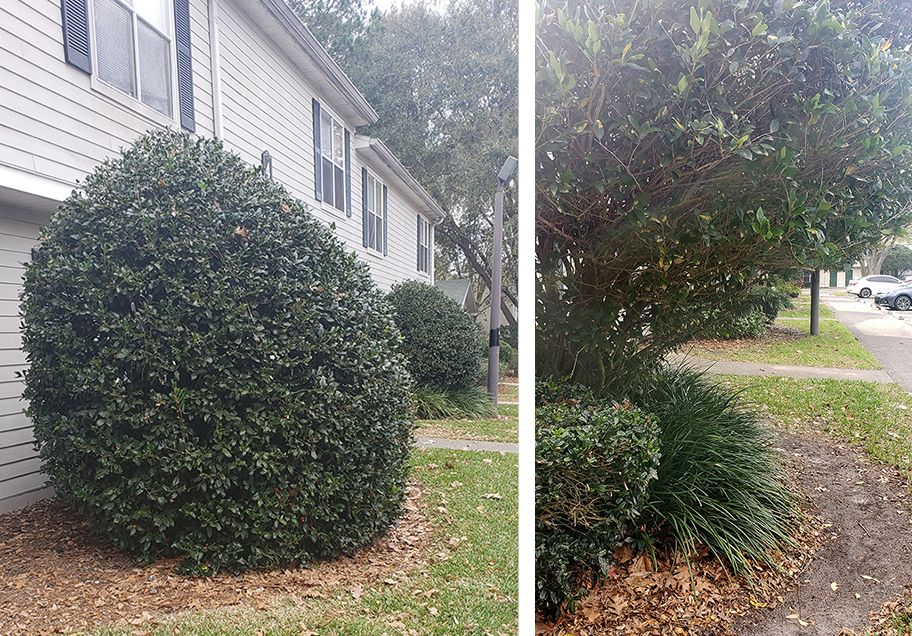 CPTED Landscaping