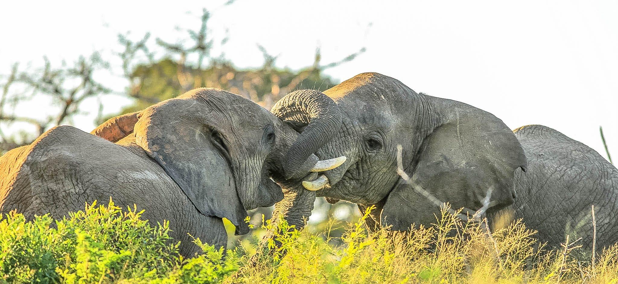 How-Elephants-use-their-Trunks-2048x942