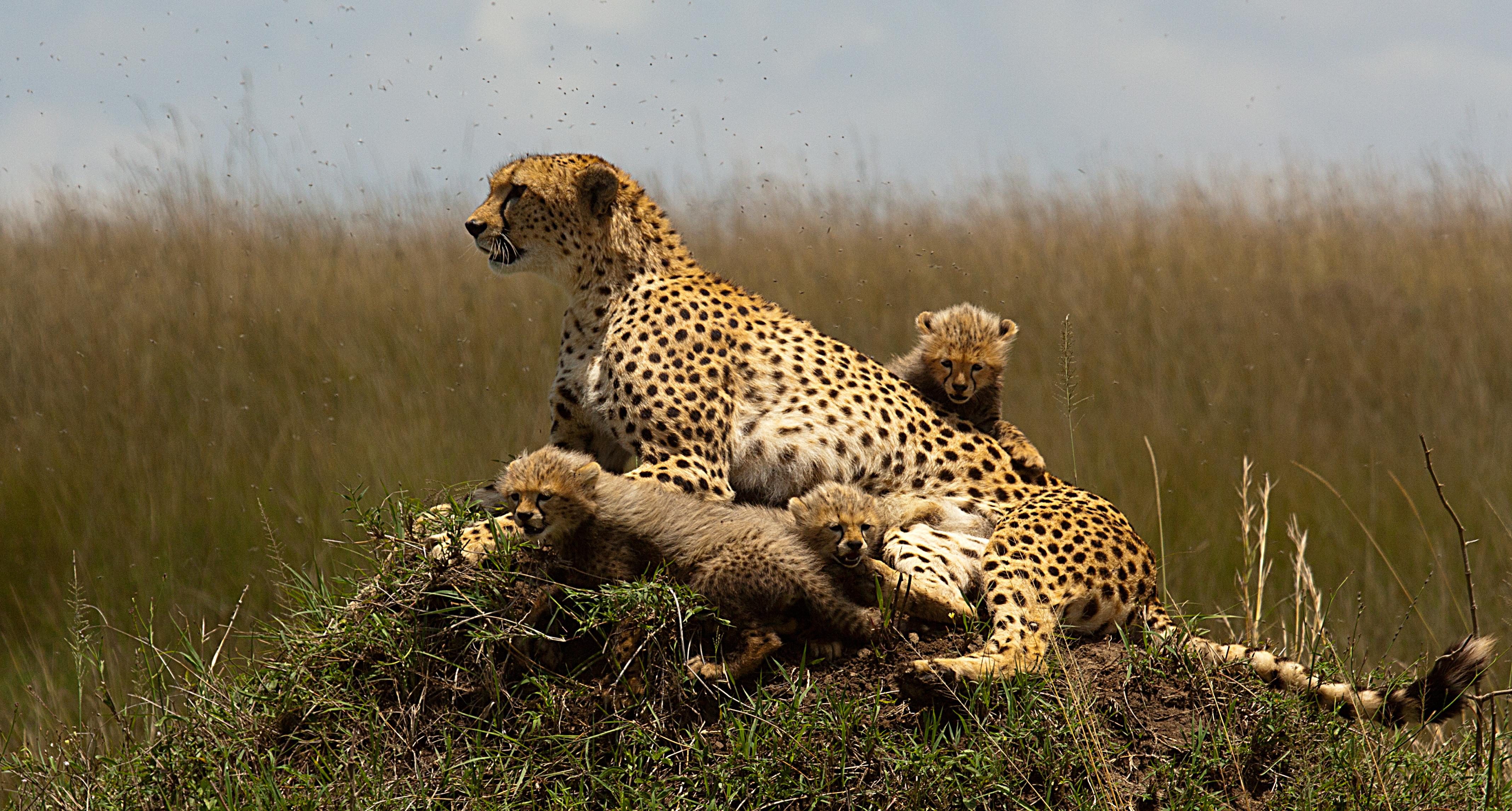 Masai-Mara-kenya