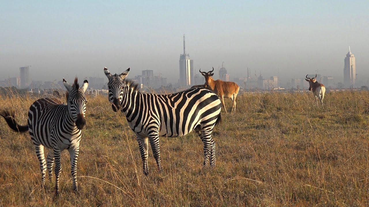 NAIROBI-NATIONAL-PARK