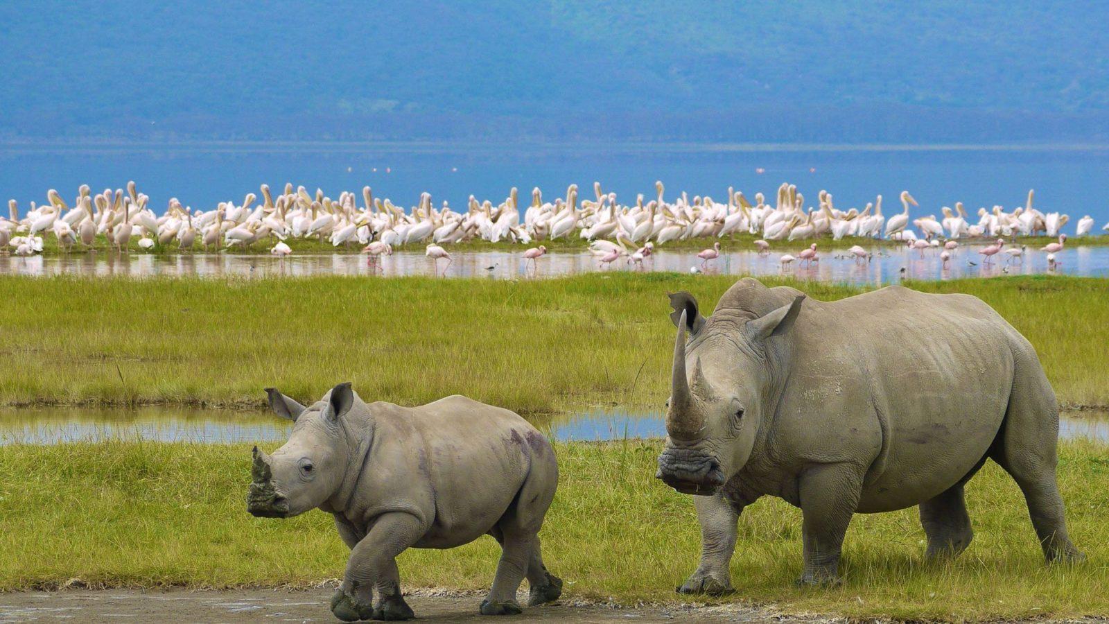 Nairobi-to-Lake-Nakuru-Naitional-Park-Excursion-1600x900