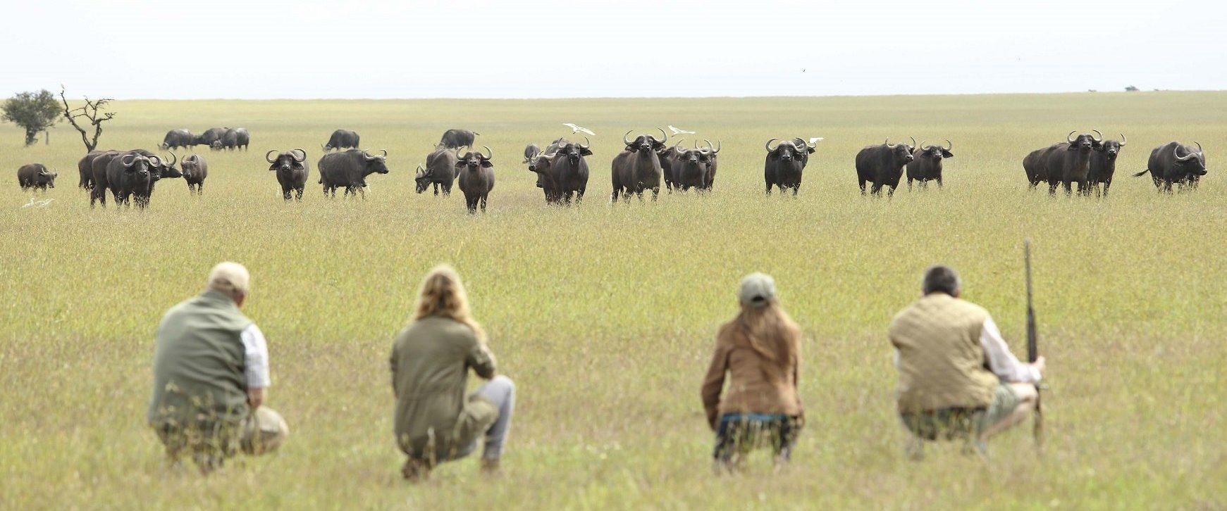 OPBC-walking-safari-animals-e1521625046135