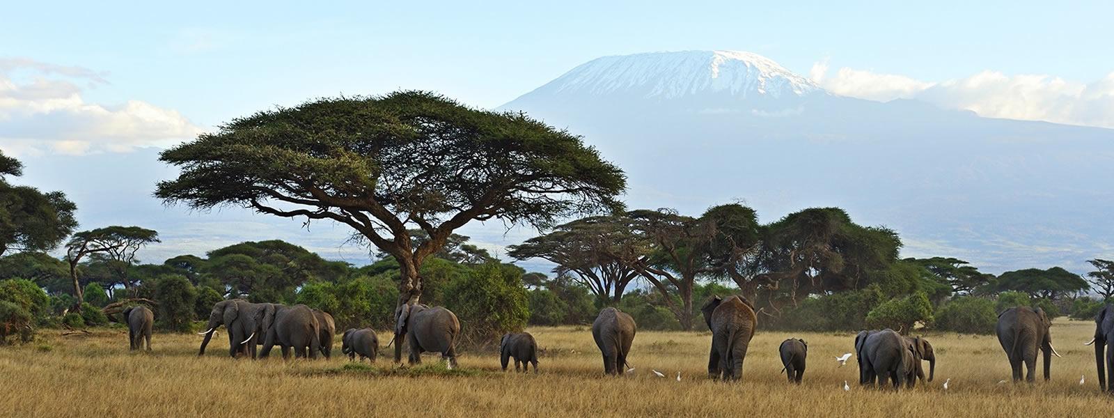 kilimanjarobc