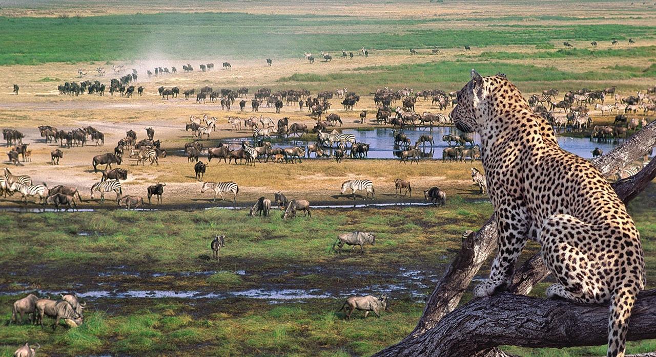 safari-ngorongoro-and-serengeti-tanzania
