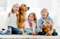About Us: Kid and pet friendly carpet cleaning in Palm Beach, Florida.