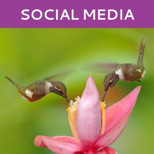 Social Media Marketing by Hummingbird Marketing in Seattle and Cleveland