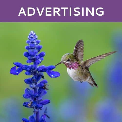 Online Advertising by Hummingbird Marketing in Seattle and Cleveland