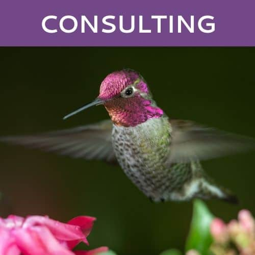 Consulting Services by Hummingbird Marketing in Seattle and Cleveland