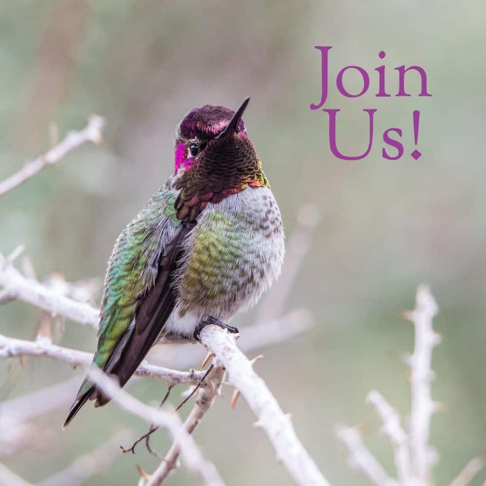 Subscribe to the Newsletter of Hummingbird Marketing Services