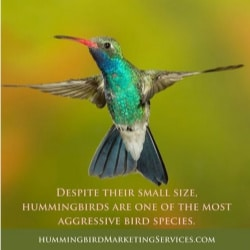 Social Media Post Example: Despite their small size, hummingbirds are one of the most aggressive bird species