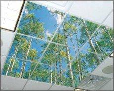 Treetops Light Fixture