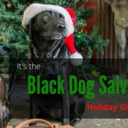 a black dog in a Christmas hat