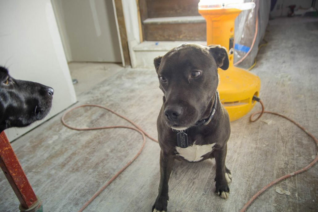 a black dog inside the Stone House during its renovation