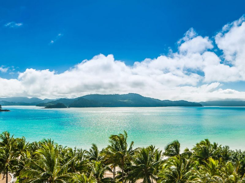 A view over palm trees in the tropical location of Hamilton Island