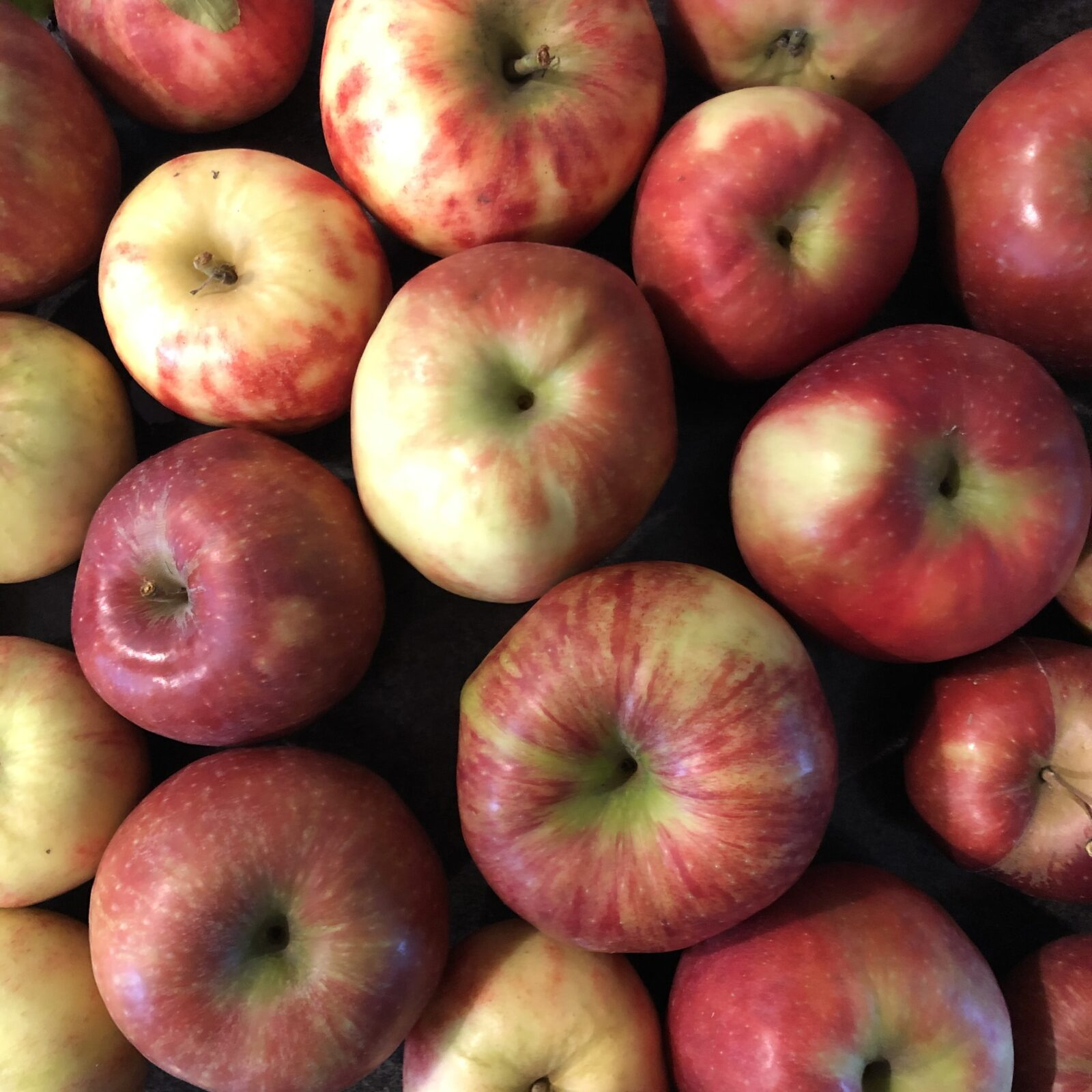Apples, Harvest