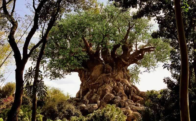 parque disney animal kingdom árvore
