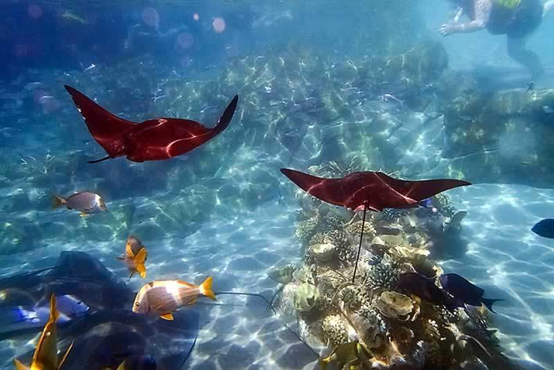 parque sea world aquático discovery cove