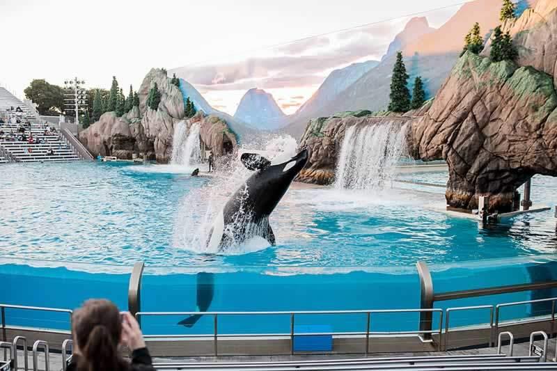parque sea world atração show baleia