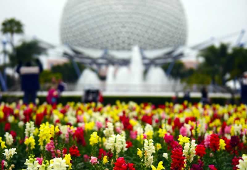 bola do parque epcot disney world com flores
