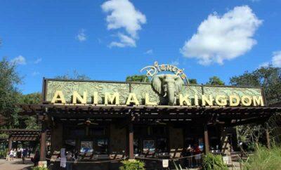 Conheça as principais atrações do Animal Kingdom