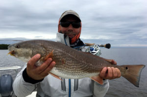 Redfish caught on a baitfish fly