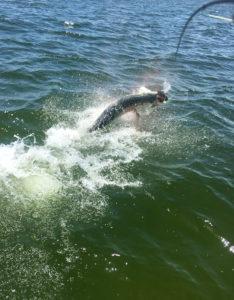 Jumping tarpon hooked in Boca Grande, FL