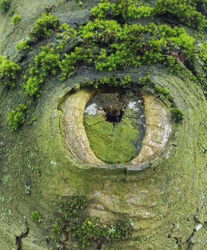 20+ завладяващи снимки, които ви хващат момента, в който ги виждате