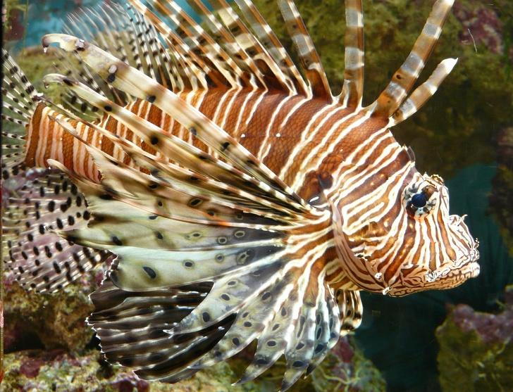 Тези 7 проблемни морски животни са опасни и ето какво да направите, ако ви ужилят