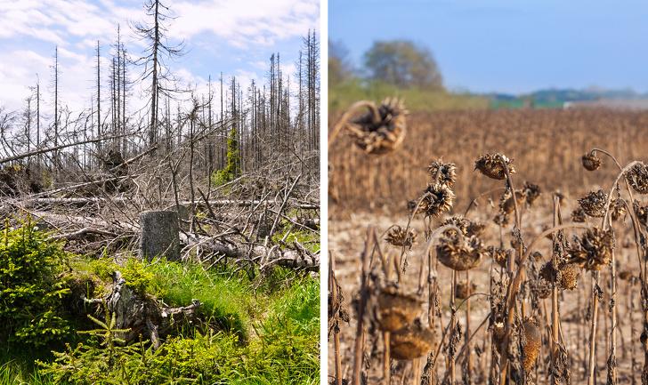 11 неща, които ще се случат на нашата планета, ако тропическите гори на Амазонка изгорят напълно