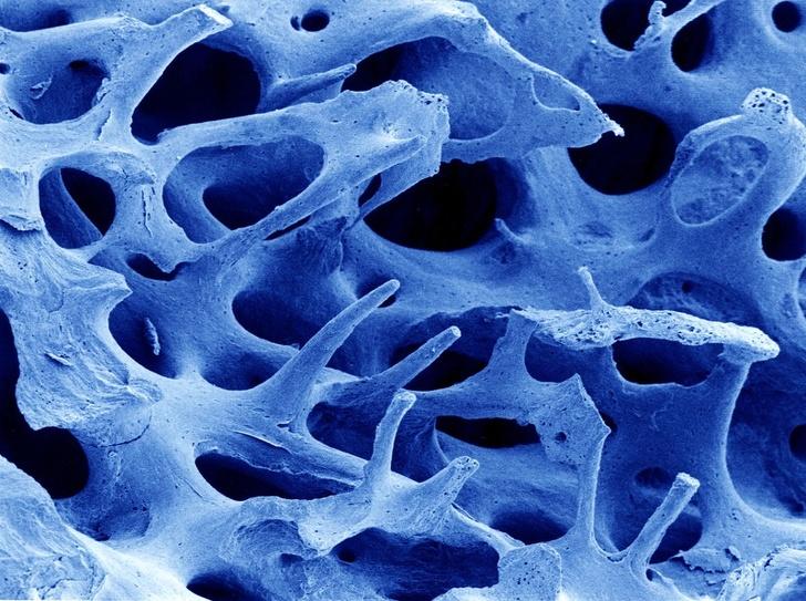 Как изглеждат нашите органи под микроскоп