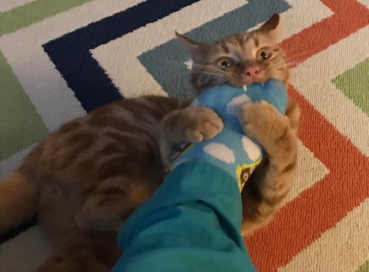 20+ безсрамни котки, чиито собственици са и валериана