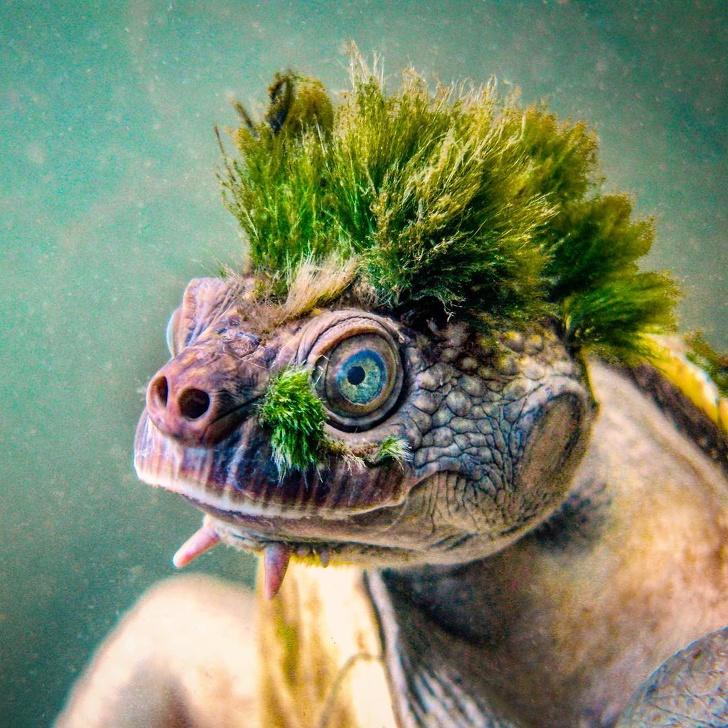 20+ факта за природата, които ще впечатлят дори онези, които четат много енциклопедии