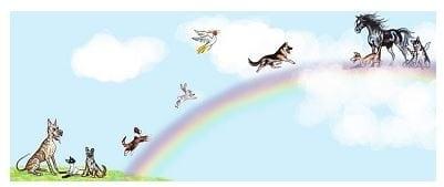 19 Aug Pets Rainbow