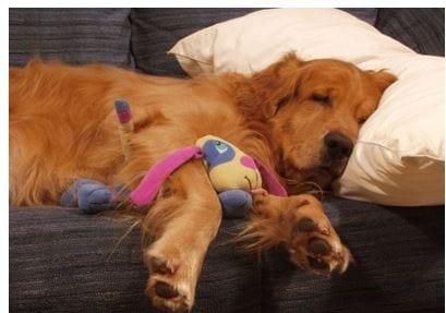 19 Sept Dogs Dream
