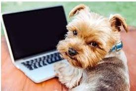 Pet at Computer