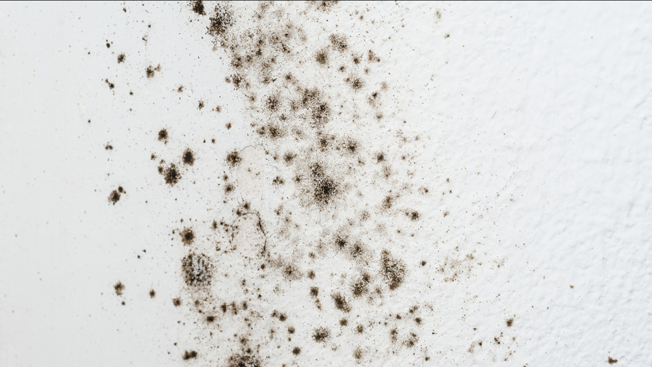 Black Mold Toxic