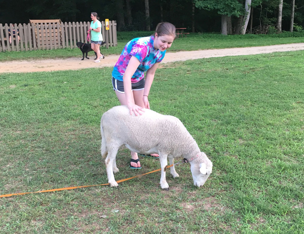 Tiny Petting Zoo Sheep at Williamsburg KOA