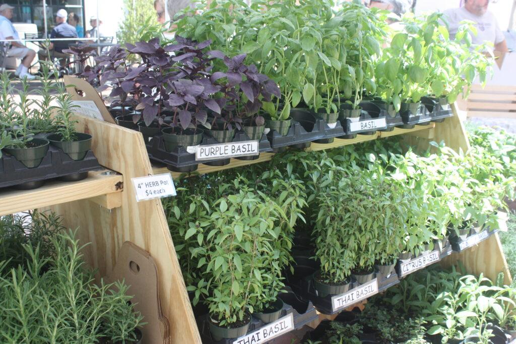 Fresh Herbs Williamsburg Farmers Market Williamsburg VA