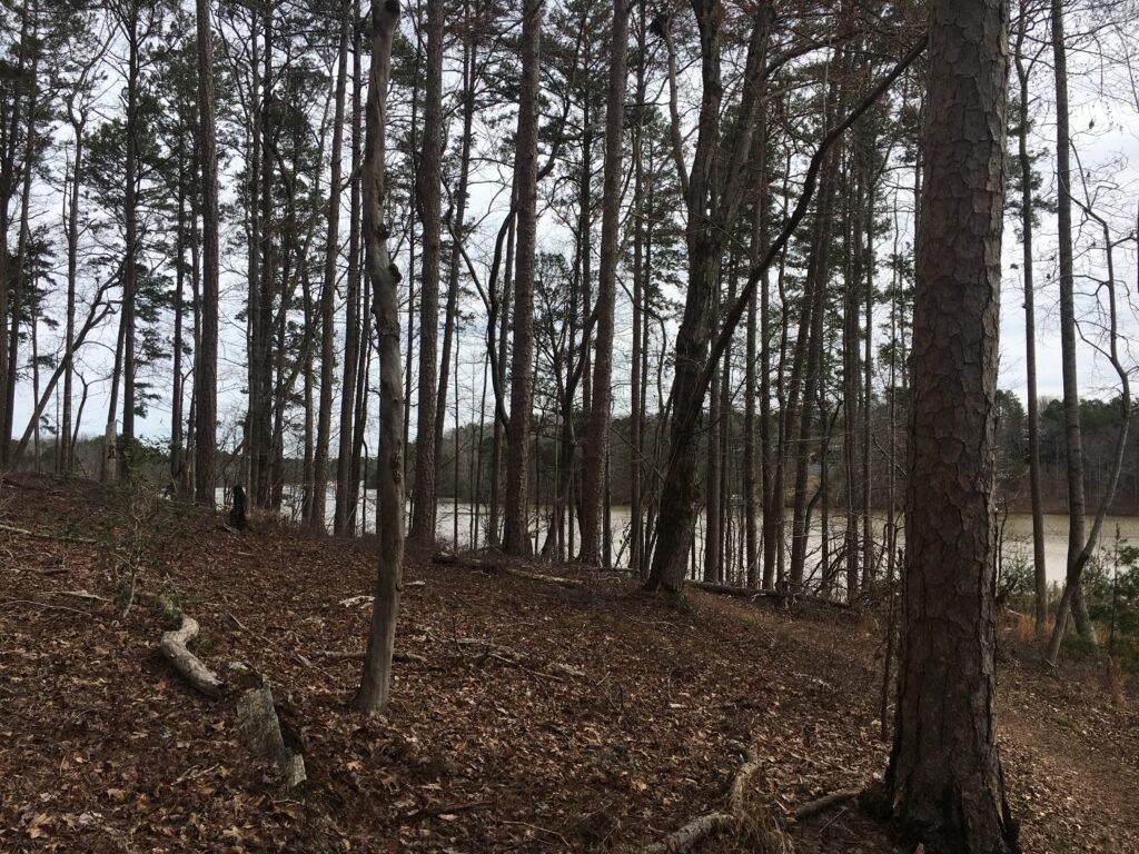 Don Carter State Park Hiking Trail Lake Lanier