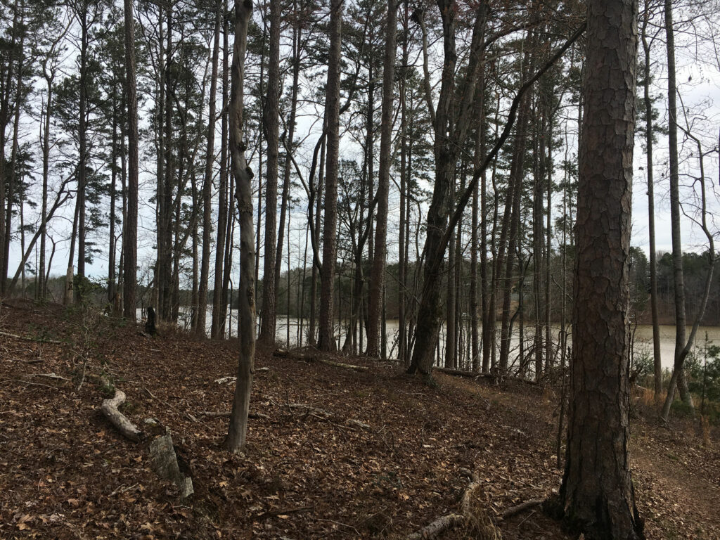 Don Carter State Park Hiking Trail Lake Lanier