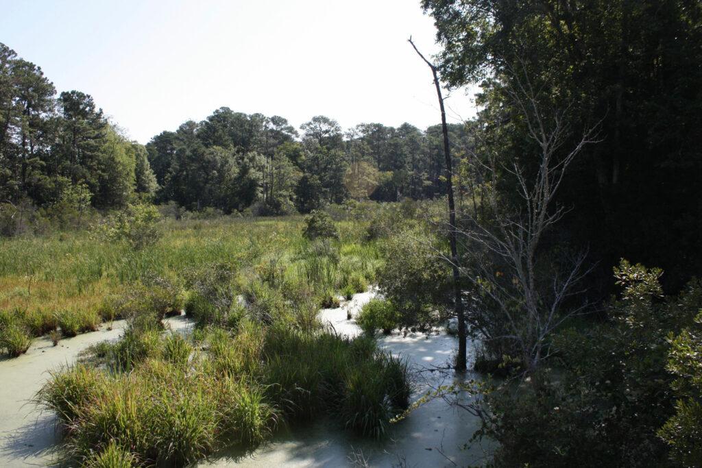 Historic Jamestowne Jamestown VA Swamp