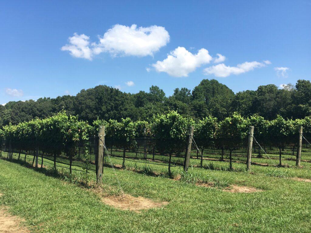Williamsburg Winery Vineyard Williamsburg VA Attraction