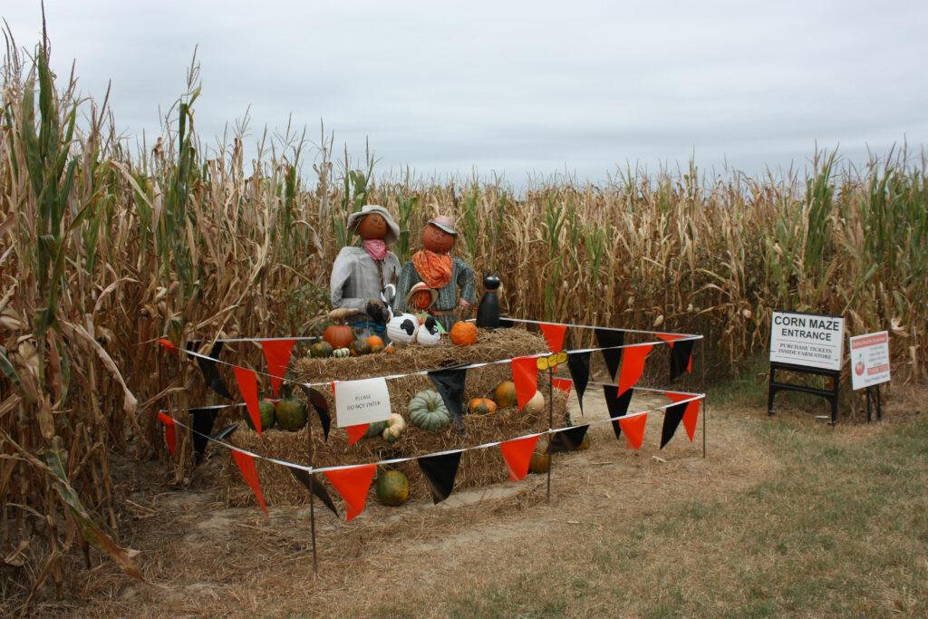 college run farm surry county va  corn maze