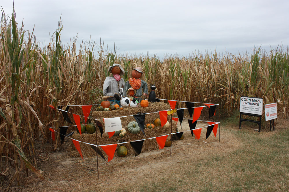 College Run Farm Surry County VA Corn Maze