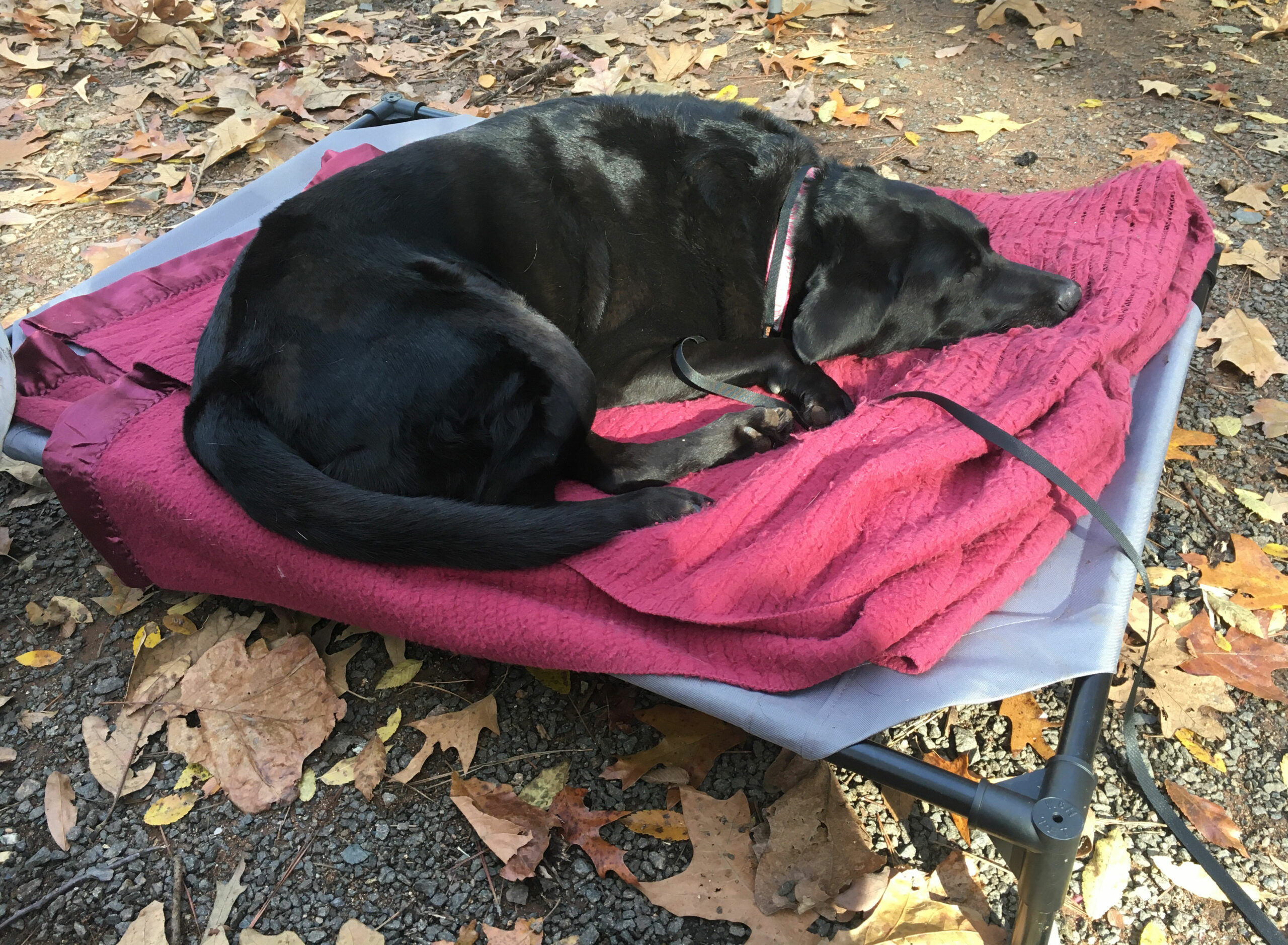 Pet Cot Portable Camping Dog Bed