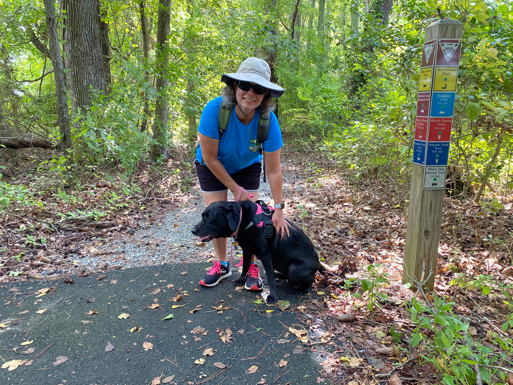 Dog is Ready To Walk a Trail at Belle Isle State Park
