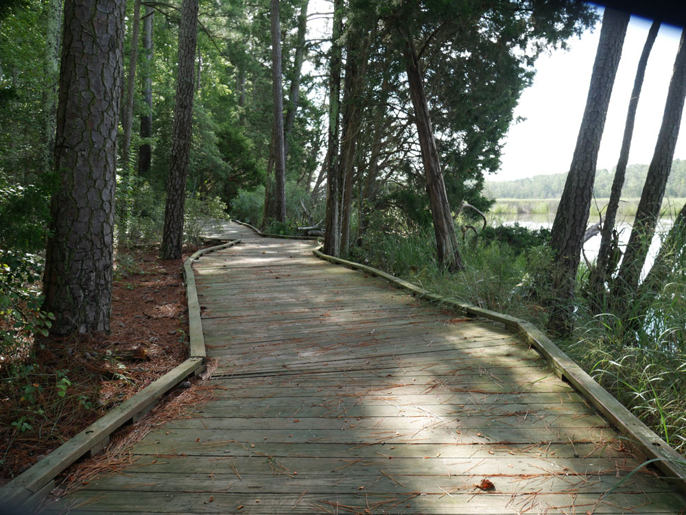 Mulberry Creek Boardwalk at Belle Isle State Park