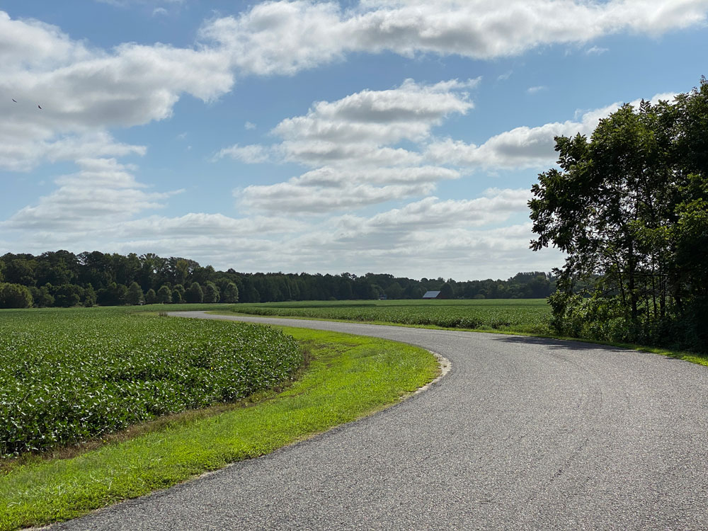 Road With Crops at Belle Isle State Park