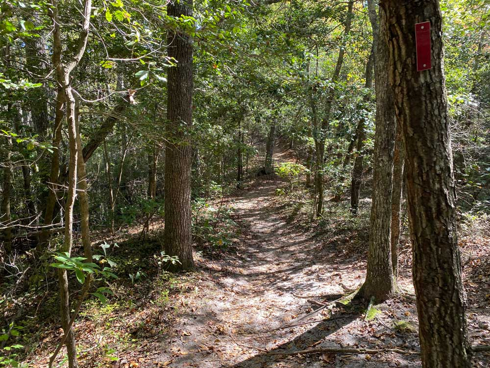 First Landing State Park Hiking Trail