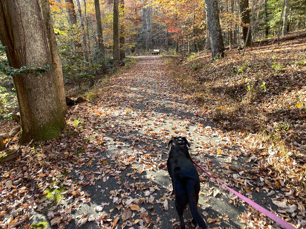 Dog on Hiking Trail at Westmoreland State Park